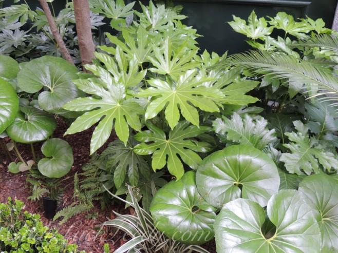 The Plants of Charleston's Cemetery