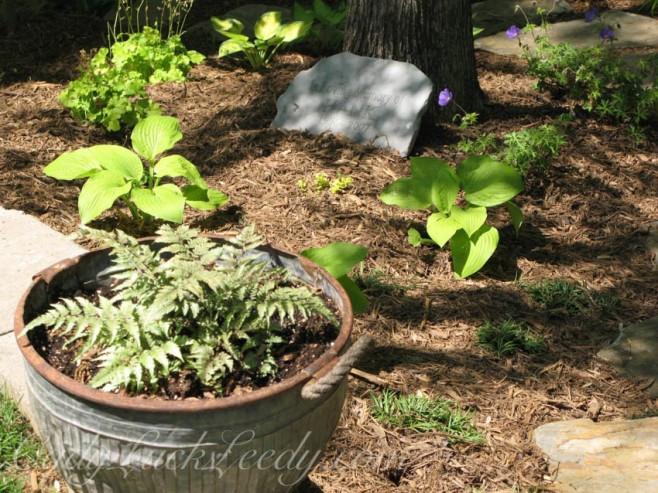 The Zinc Fern Pot in the Woodland Garden
