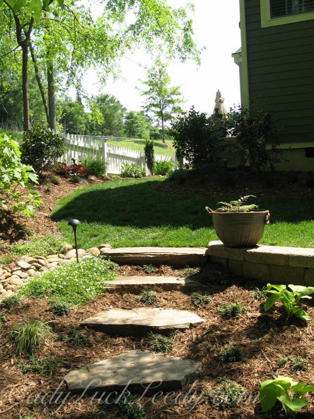 The Zinc Fern Pot in My Woodland Garden