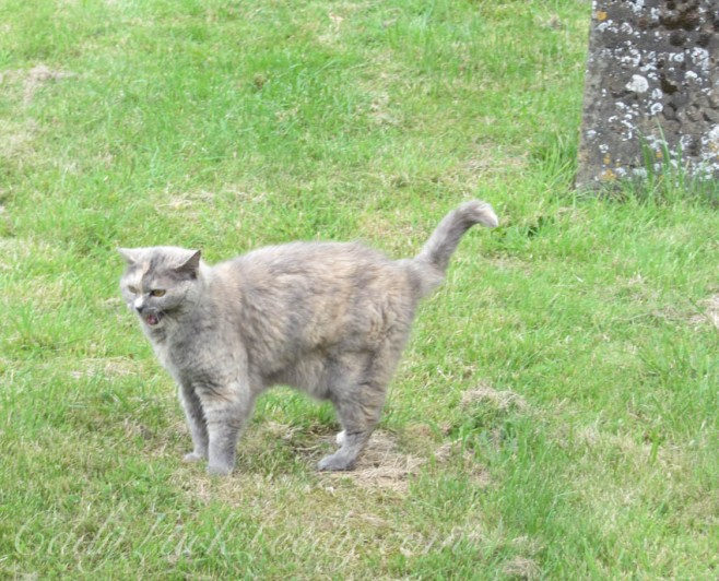 The Unhappy Graveyard Cat