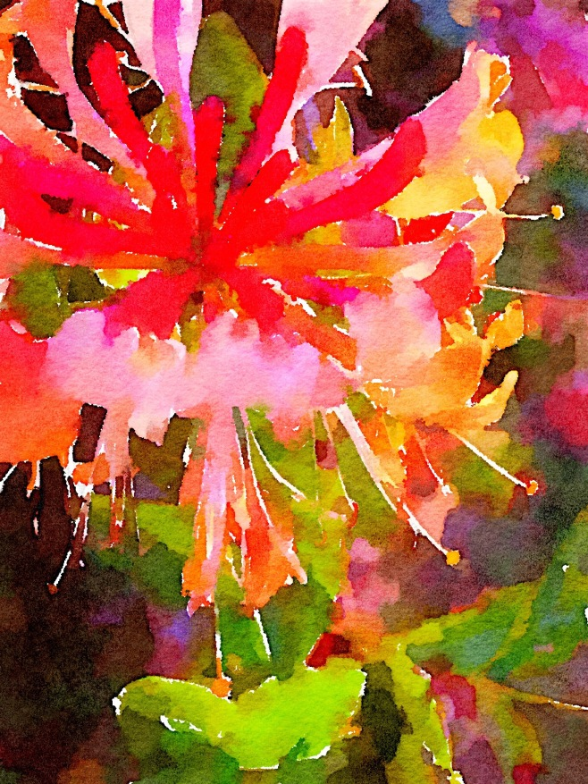Fuchsia Painted in Waterlogue