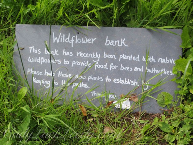 The Wildflower Bank at Greenway