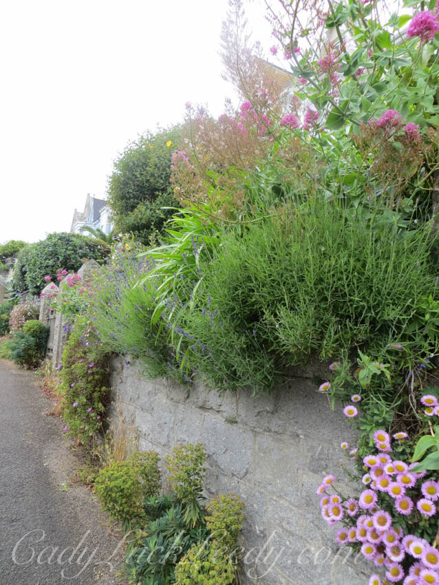A Wall of Greenery, St Ives, Cornwall
