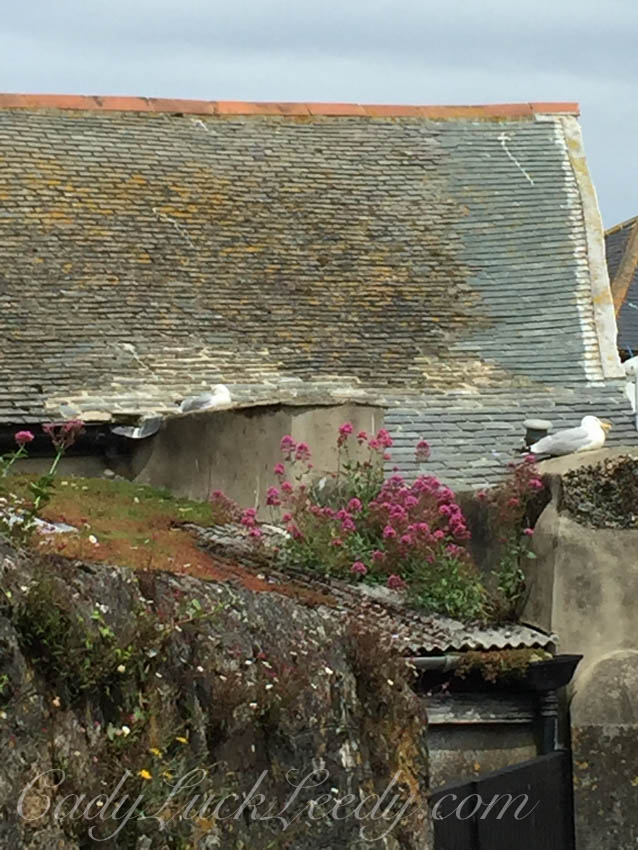 The Seagulls, St Ives, Cornwall