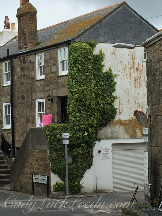 The Ivy on the Wall, St Ives