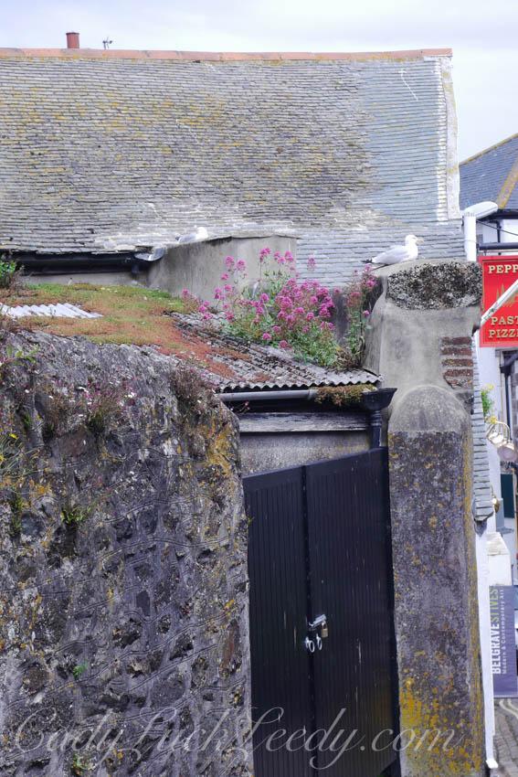 The Seagulls Door, St Ives