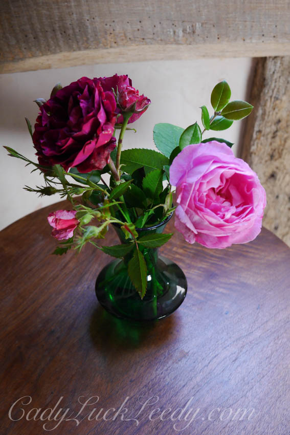 More Flowers from the Potting Shed, Benenden, UK