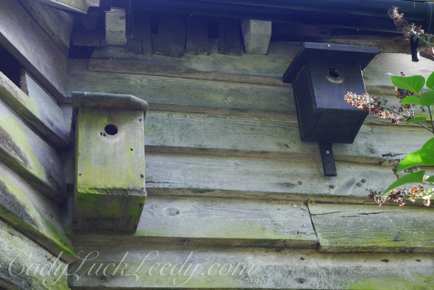 The Birdhouses, the Potting Shed
