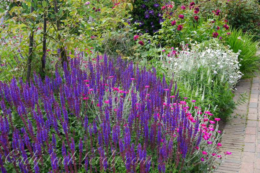 The Purple Garden at Sissinghurst, UK