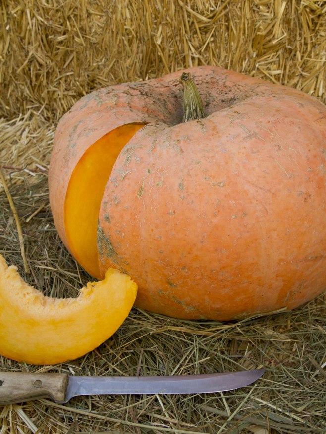 Jaune Gros de Pumpkin