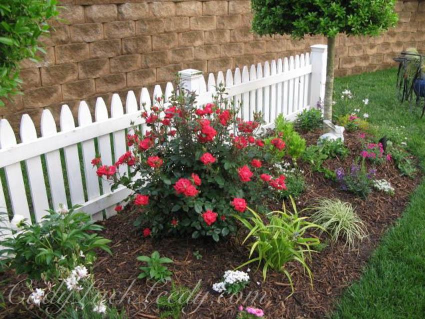 June, The Shrub Roses