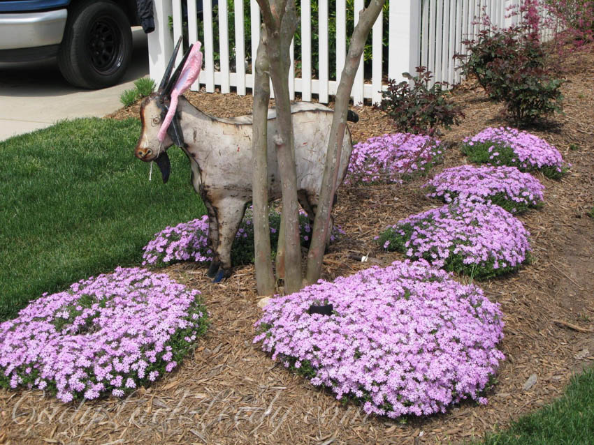 April, Ivy the Goat with Phlox