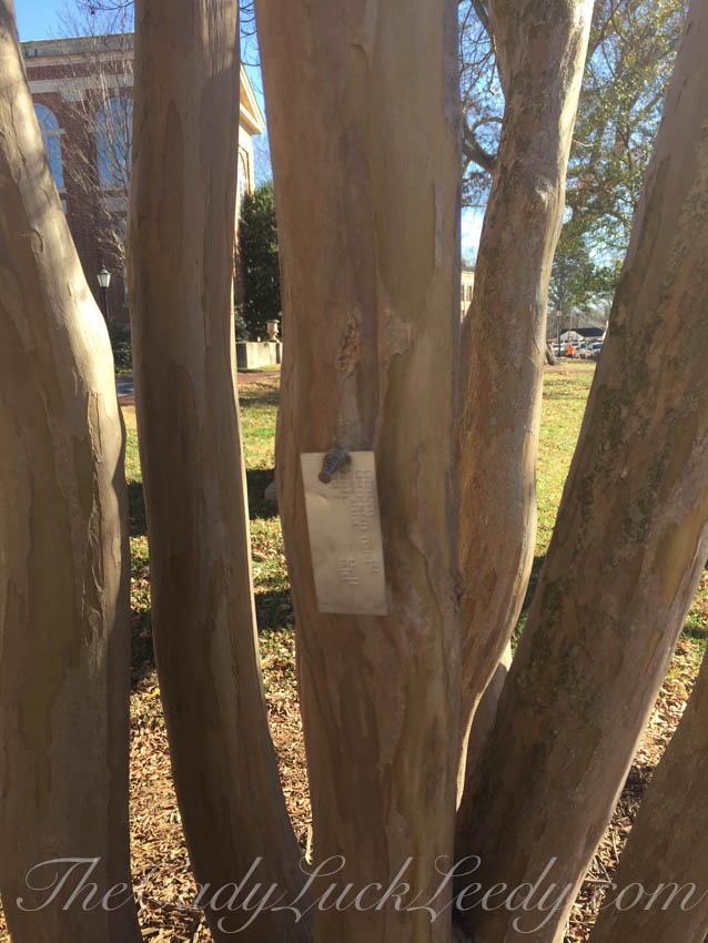Tagged Crepe Myrtle